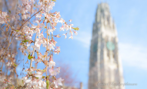 Yale Calendar 2020 Top 10 Punto Medio Noticias | Yale Academic Calendar 2020 21